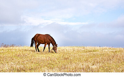 Horse pastures at the green grass meadow