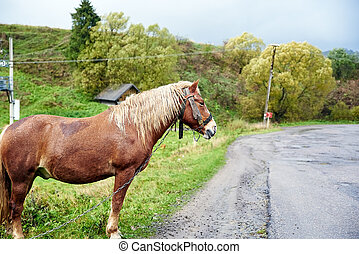 Horse with beautiful mane on the road