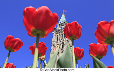 Canadian Parliament, red tulips - Canadian Parliament...