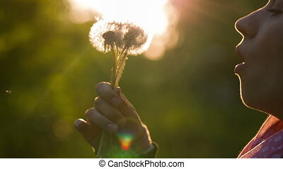 Woman Blowing a Bouquet of Dandelions - Woman blowing on...