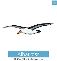 Albatross learn birds educational game vector illustration