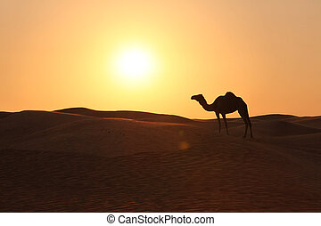 solo, camello, en, un, tarde, sol