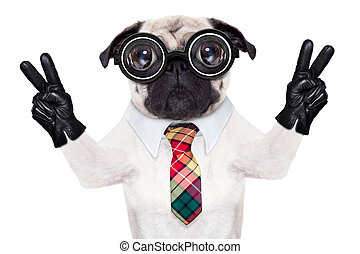 dumb cool crazy dog - dumb crazy pug dog with nerd glasses...