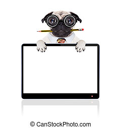 dumb crazy dog - dumb crazy pug dog with nerd glasses as an...