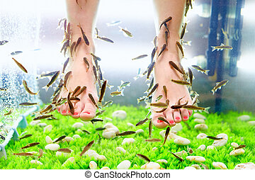 fish pedicure spa treatment, rufa garra fish