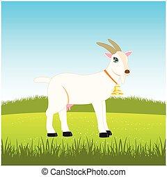 Nanny goat on field - Nanny goat with campanula grazes on...