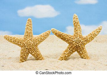 Starfishes - Starfish standing in the sand with sky...