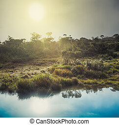 The Horton Plains Sunrise - Foggy sunrise at Horton Plains...