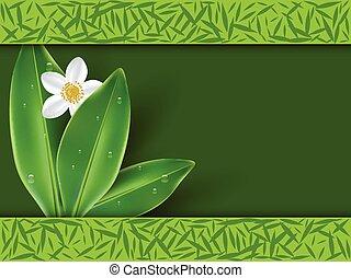 Jasmine tea with jasmine flowers as backround