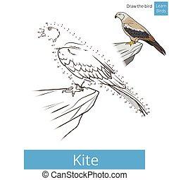 Kite bird learn birds coloring book vector - Kite bird learn...