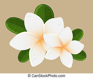 White plumeria flower logotype Vector illustration of white...