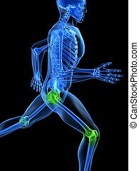 healthy joints - 3d rendered illustration of a running...