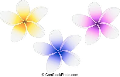 Plumeria three flowers painted in different colors
