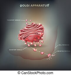 Golgi apparatus abstract background - Golgi apparatus...