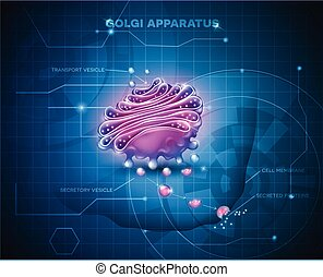 Golgi apparatus abstract technology background. Detailed...