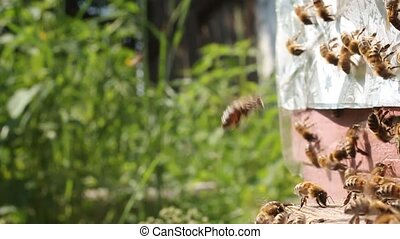 Active movement of bees near the en - Bees fly continuously...