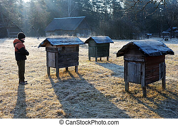 Country apiary in early spring - Boy looks at the hive...