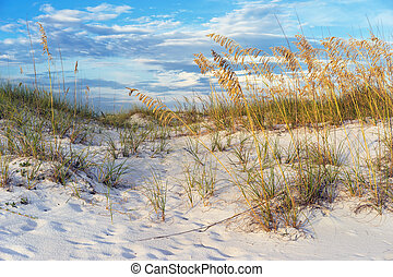 Golden Sea Oats in the Florida Sand Dunes Landscape -...
