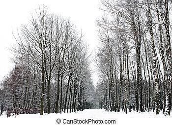 Beautiful calm winter day. Carpathians. National park -...