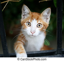 Beautiful red cat looks big round eyes