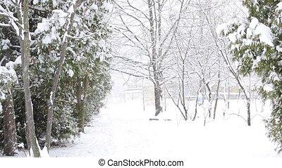 Snow falling diagonally on white snowy background with thuja...