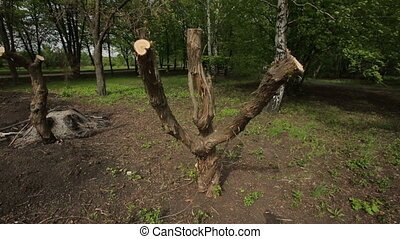 Sawn Tree Branches - Sawn tree branches at the park