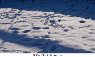 Footprints at the Snow