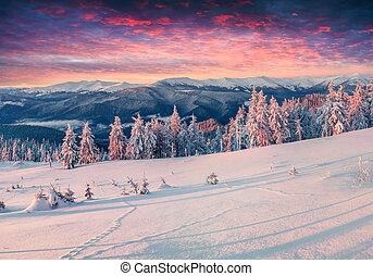 Colorful winter sunrise in the snowy mountains. Fresh snow...