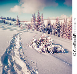 Sunny winter landscape in the mountain forest. Instagram...