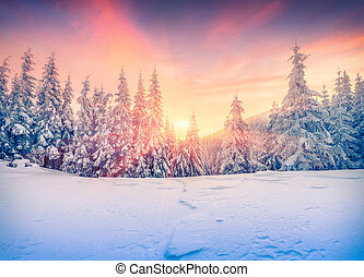Colorful winter sunset in mountain forest