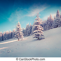 Sunny winter landscape in the mountain forest?
