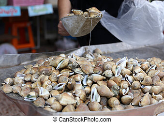 live conch in the market - Fresh live conch in the market in...
