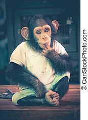 かわいい, 座りなさい,  -, チンパンジー, ウエア,  prakan, テーブル, タイ, 衣類,  SAMUT