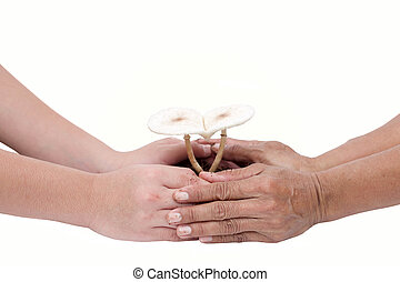 Senior and child hand take care of a heart shaped mushrooms...