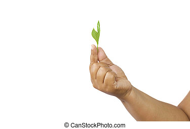 Agriculturist holding fresh leaves in hand in white...