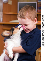 Puppy licking childs face - A little dog licking a young...