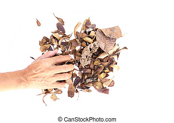Agriculturist hands on dry leaves in isolated -...