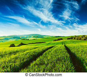 Green fields of Moravia - Vintage retro effect filtered...