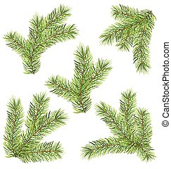 Spruces Branches Isolated on White Background
