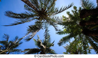 wind shakes palm branches against blue sky sun disk - wind...