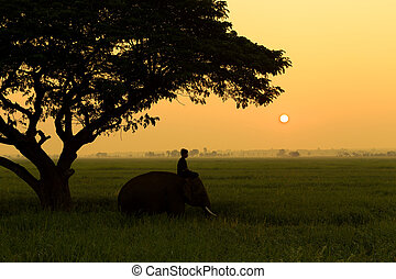 Mahout with elephant silhouette at sunrise