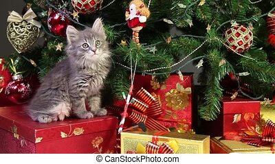 Cute kitten under Christmas tree - Little grey kitten...