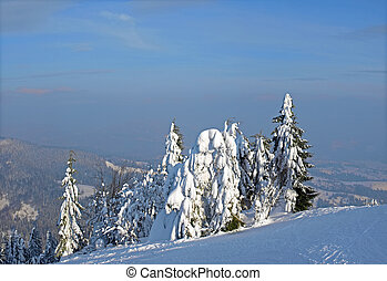 Winter mountain landscape - Group of trees covered with a...