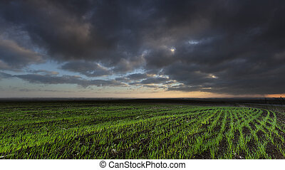 Cloudly Morning in The Farmland - Autumn Morning in The...