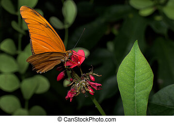 butterflies from around the world - Butterflies are common...