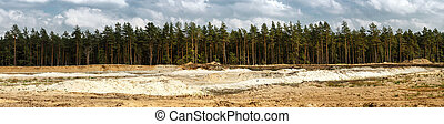 Pine forest and sand pit - Panoramic landscape with pine...