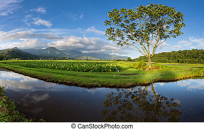 Panoramic view of Hanalei Valley in Kauai - Panorama of...