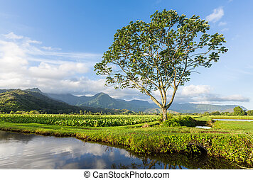 Panoramic view of Hanalei Valley in Kauai - Panorama of...