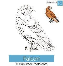 Falcon bird learn birds coloring book vector - Falcon bird...