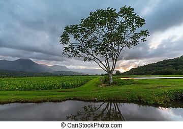 panorámico,  Hanalei, Valle,  Kauai, vista